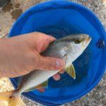 釣り in 新島
