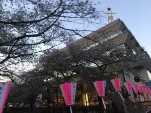 春の始まり葉桜は中目黒目黒川
